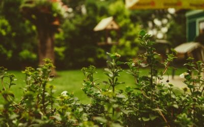 Top Tips To Help You Complete Your Dream Garden Makeover